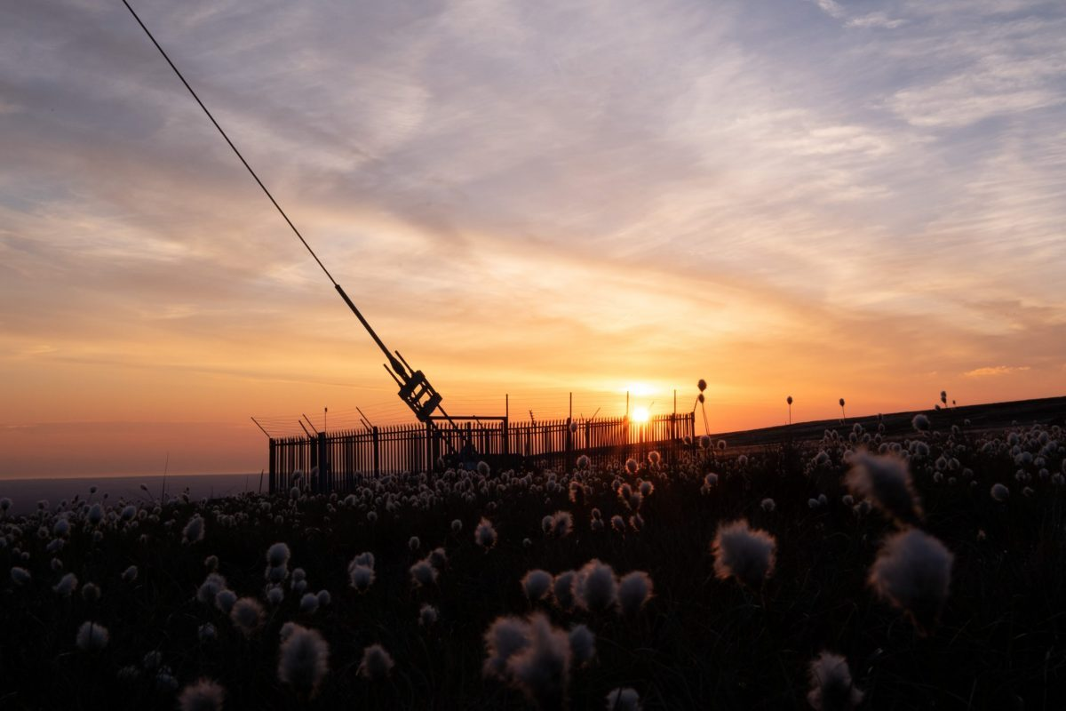Winter Hill mast stays & bog cotton