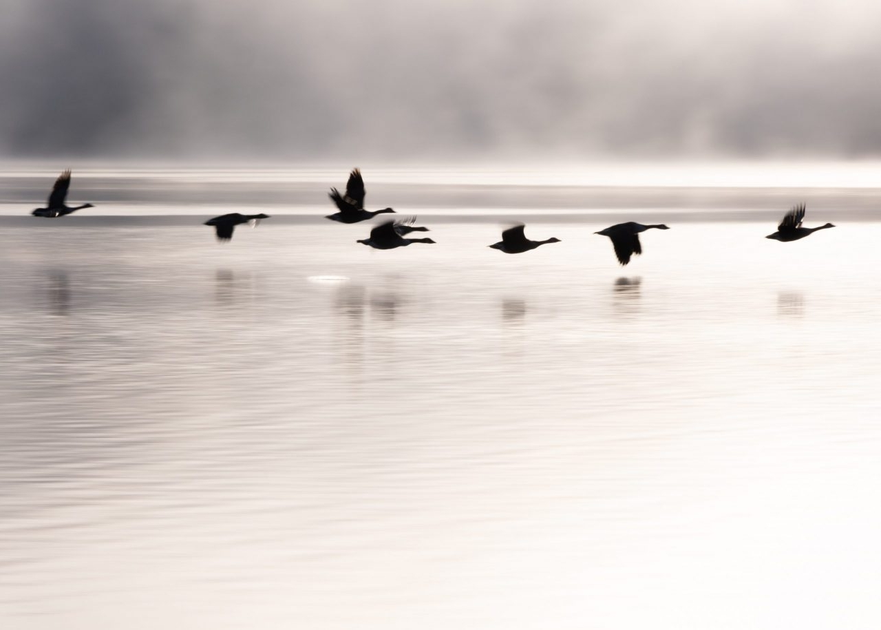 September - Geese over Ullswater